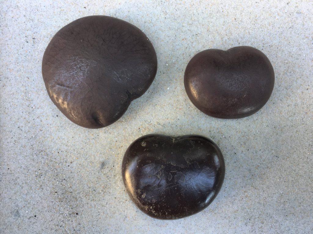 Photograph of 3 sea hearts